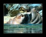 hippos1 by pureonefromthemeadow