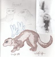 Winged Ferret, I loves ferrets by killerblonde08