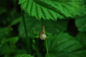 little snail by Lk-Photography