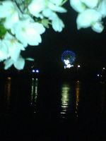 Fireworks with Cherry Blossoms by blackmariah27