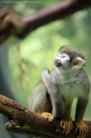 Squirrel monkey by HappyRaindrop