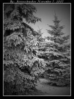 Snowy Trees 2 by ArtressCreativeTools