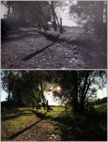 Analog vs. Digital Photography by pernicek