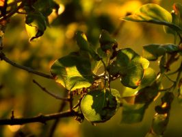 An Abundance Of Greens And Golds by SMBaird