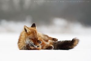 Comfortably Fox by thrumyeye