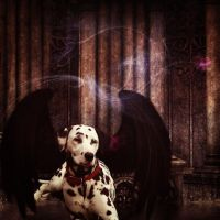 The Gothic Dalmatian by Shelter2030