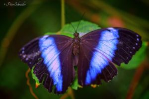 Electric blue! by Phototubby