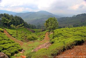 View from Club Mahindra resort, Munnar by vharishankar