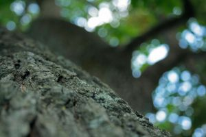 Close-up-tree. by whoyouclaimtobe