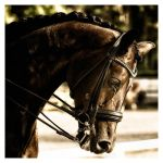Dressage by AndersStangl