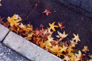 leaves in the gutter by shyfoxling