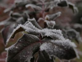 Frosty Leaf by SophiaShadow