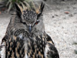 Eagle Owl II by Elli090