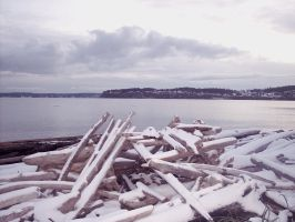 Stock: Snow Driftwood on Beach by Stock-By-Michelle