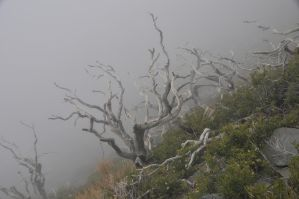 Wicked Tree on Mt. Baldy by AndySerrano