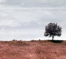 Lonely Tree 9 by JustMe255