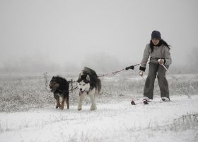 skijoring 2 dogs by sibeworld