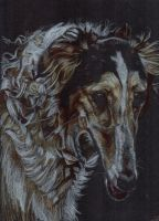 Borzoi portrait 3 by captainhawkeh