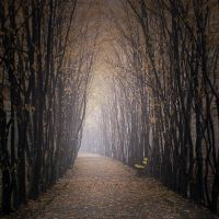 Autumn alley by Alshain4