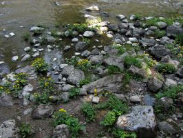 Yellow flowers by the rapids by Wolverica