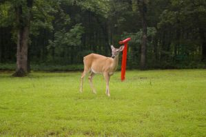 White Tailed Deer by OverStocked