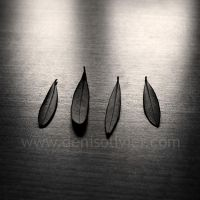 Four Olive Tree Leaves by DenisOlivier