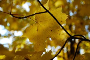 Fall Colors - Yellow by brandychristine1987
