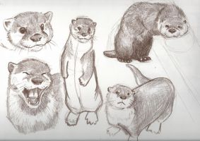 Otter Sketches 01 by RuntyTiger