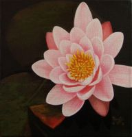 Water Lily by KMAP3156