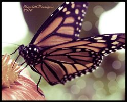 Monarch Butterfly by mariquasunbird1