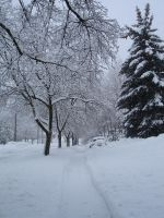 Snowy Day Stock -18 by Tefee-Stock