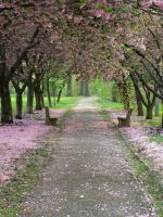 Pretty Path 1 by bean-stock