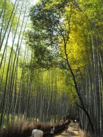 The bamboo trail by Julesjustjules