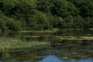 Pond lake 1 by Kennelwood-Stock