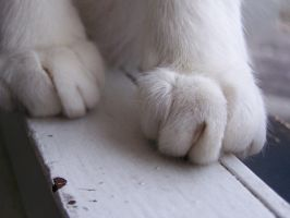 Paws on the window frame.. by M03PS