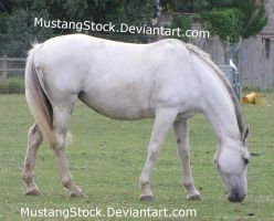 Grey horse grazing Stock 2 by MustangStock
