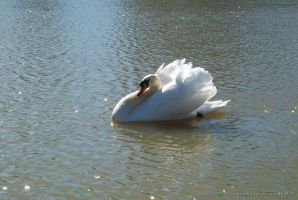 Swan by VisibleBeauty