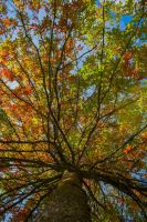 trees X by davidst123