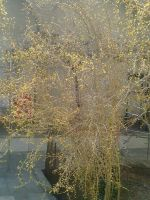 Golden tree by zohreh1991
