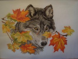 Wolf by Acicula-a