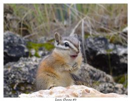 Squirrel on 'Base and Cavin' by LucasChavez3