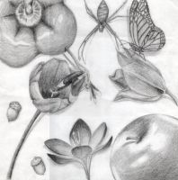 Pencil Drawing by bloominglove