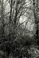 Mournful forest... by thewolfcreek