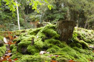 Moss by doulifee