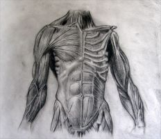 Midterm Drawing #1: Torso by RockabillyReese