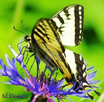 Butterflies And Flowers Drifting In Color by 33M