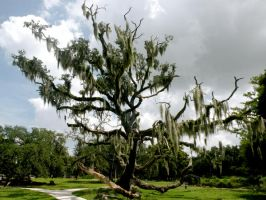 New Orleans City Park 09 by nevertakemystock