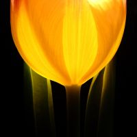 flower light by Dieffi