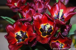 Tulips by DiscardThisMessage