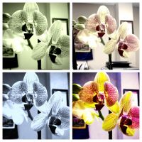 Orchid in Four by SpiritAndLight